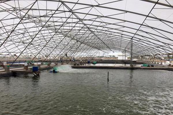 màng nhà kính làm nhà nuôi trồng thủy hải sản