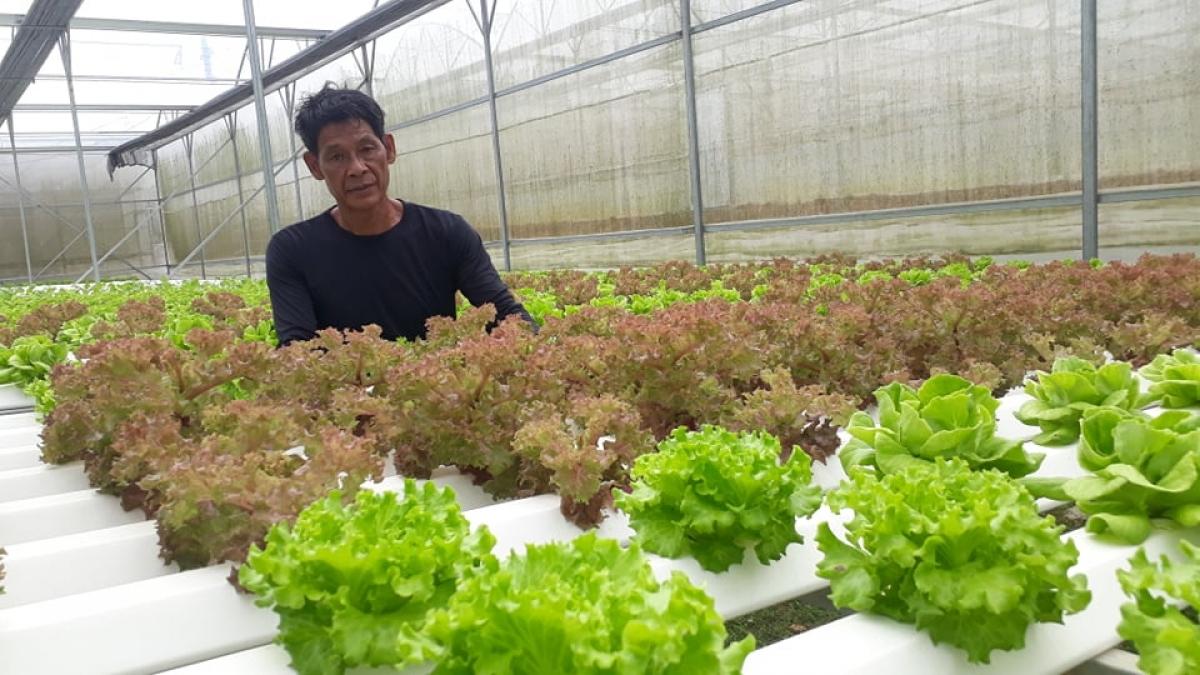 Đà Nẵng đẩy mạnh ứng dụng công nghệ cao trong sản xuất nông nghiệp